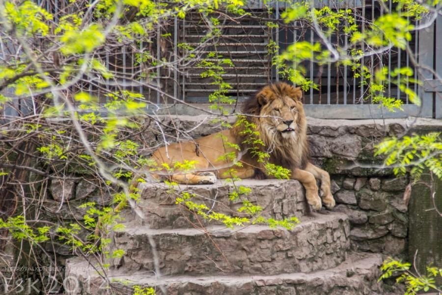 Mykoiv_zoopark_07