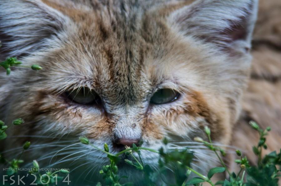 Mykoiv_zoopark_16