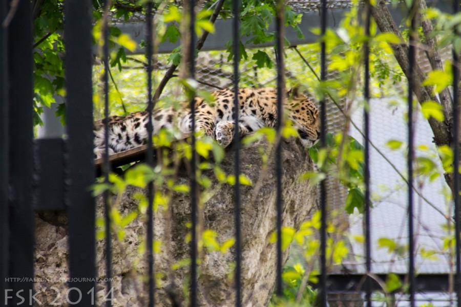 Mykoiv_zoopark_21