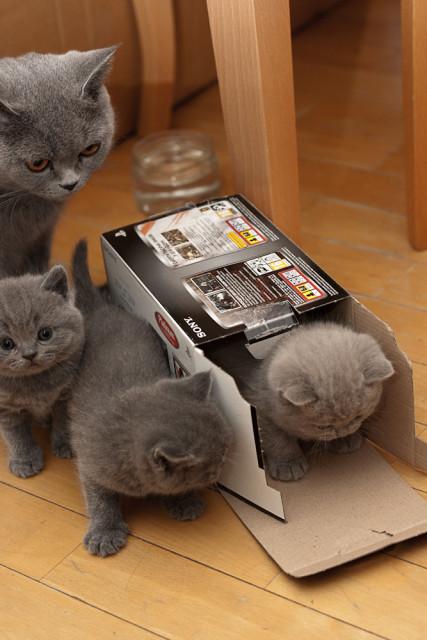 отличная коробка