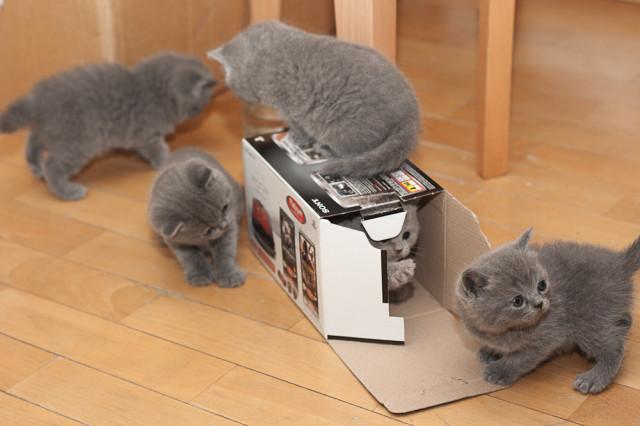 игра с коробкой