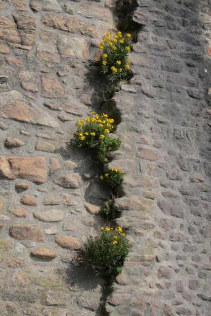 Mont Saint-Michel 5