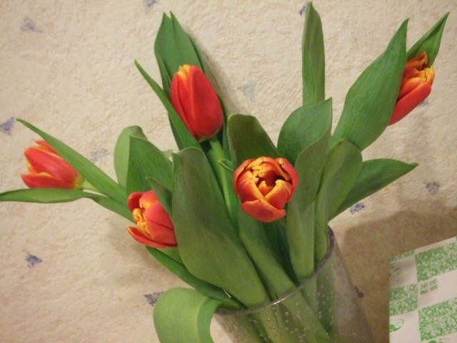 red-n-yellow tulips