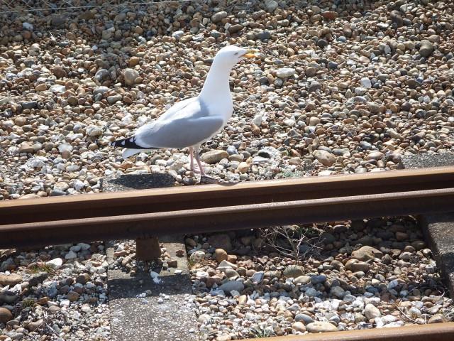 Seagal & railway