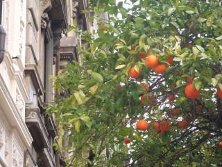 Весна в Риме сезон пробуждения.  В марте температура воздуха днем 12-15 C со знаком плюс, ночи холодные до 5 C...