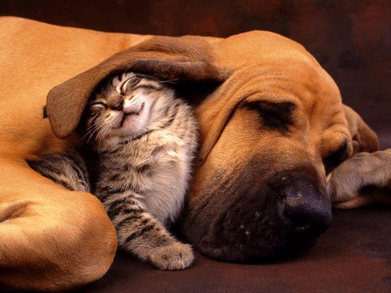 Кот&пес
