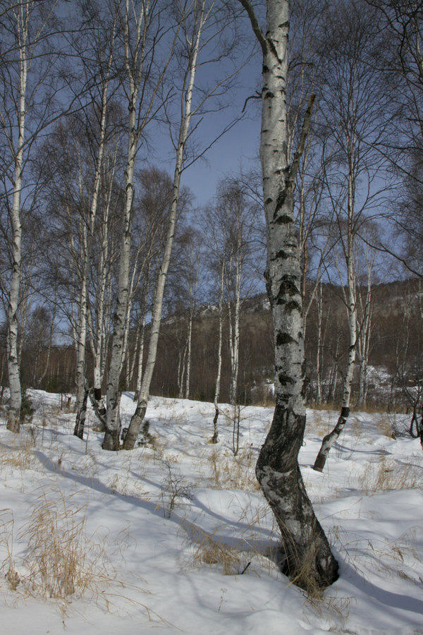 зима в Сибири фото