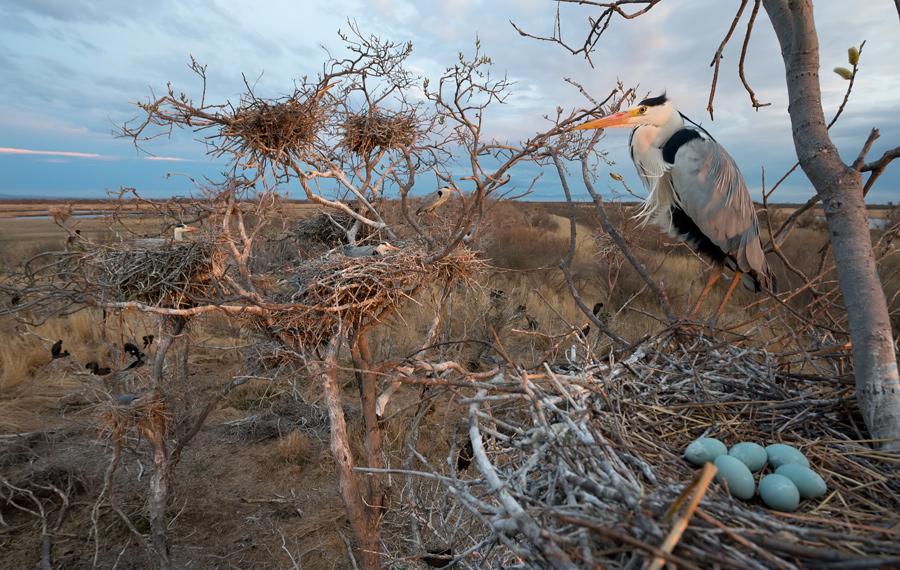 гнездование птиц