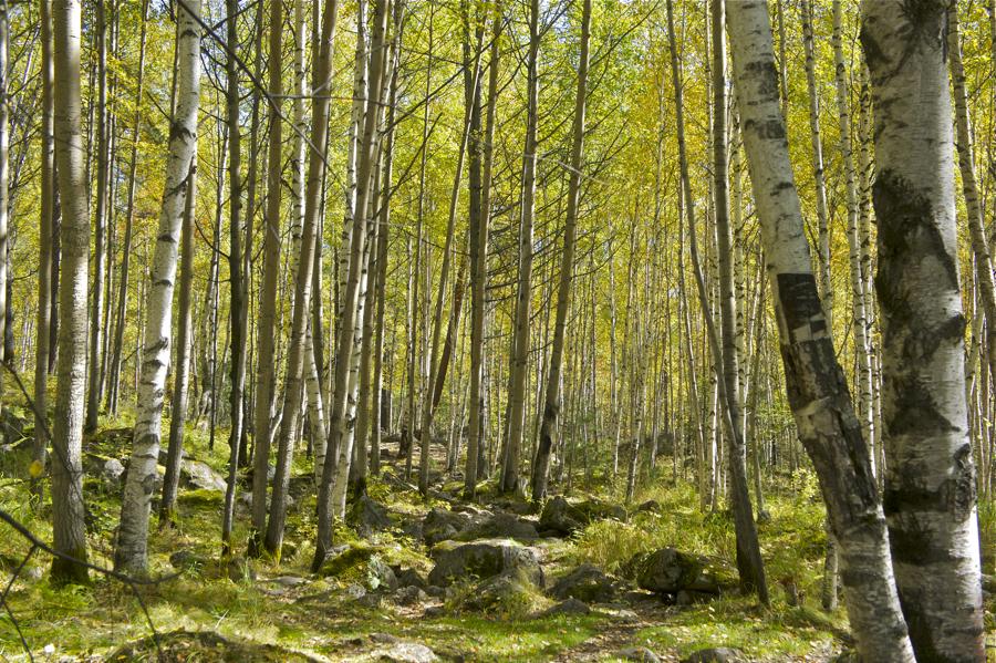 осенний лес фото