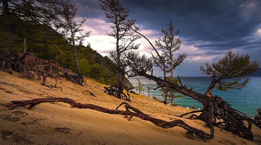 ходульные деревья в бухте песчаная