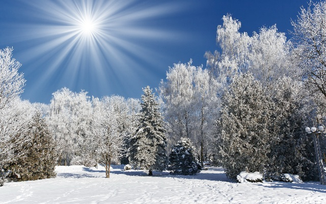 nature-trees-forest-winter-snow-frost-sun