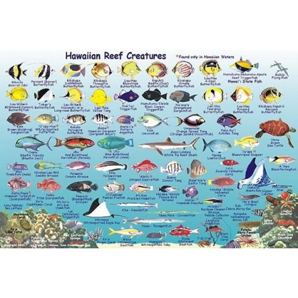 molokai-fish-card2_resize