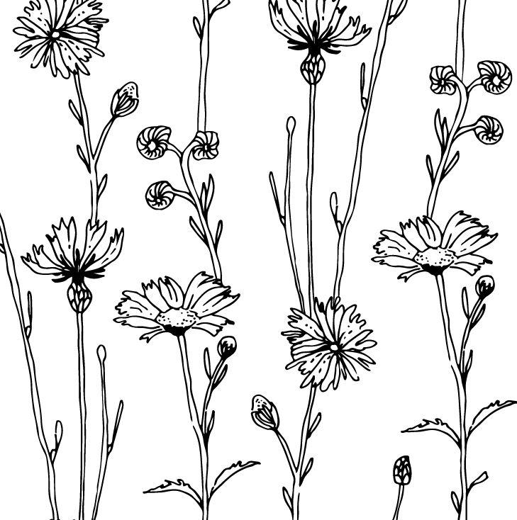 field-herbs