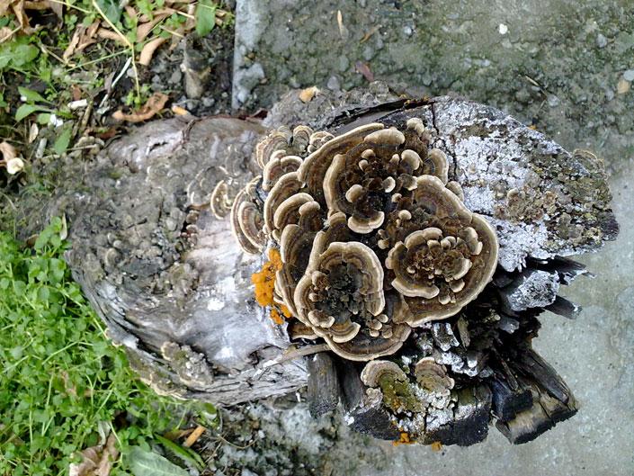 нелюбовь-грибы