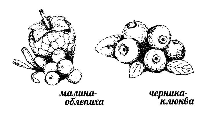 малина-облепиха
