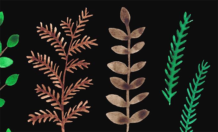 watercolor-flowering-herbs-02