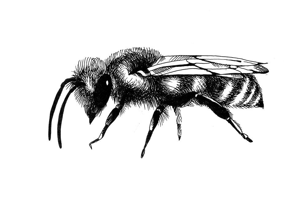 пчела-01