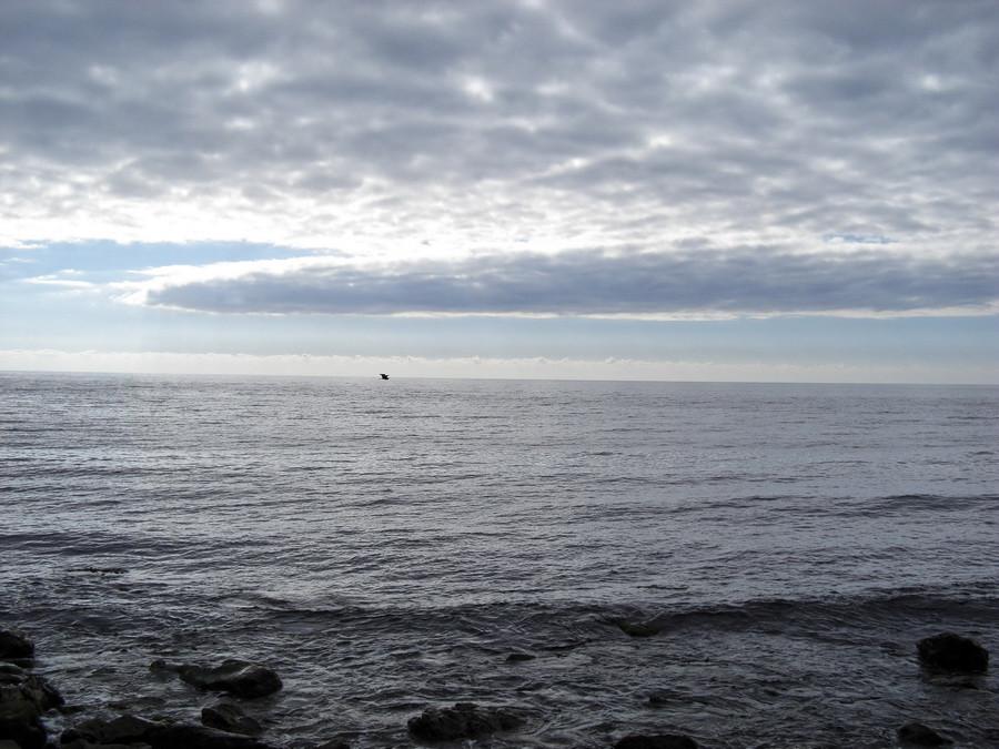 море птычка2