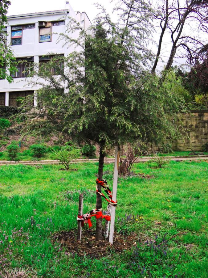 узлы на дереве