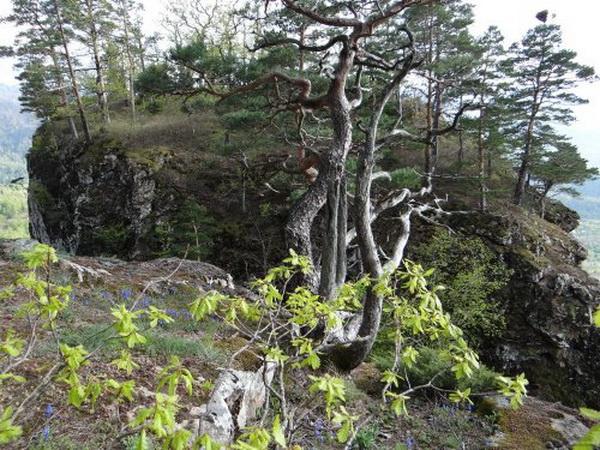 Столовая вершина скалы-останца Пчелинка