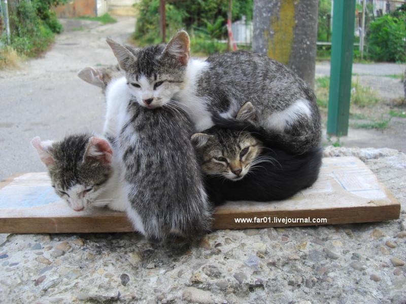 Туапсе котики