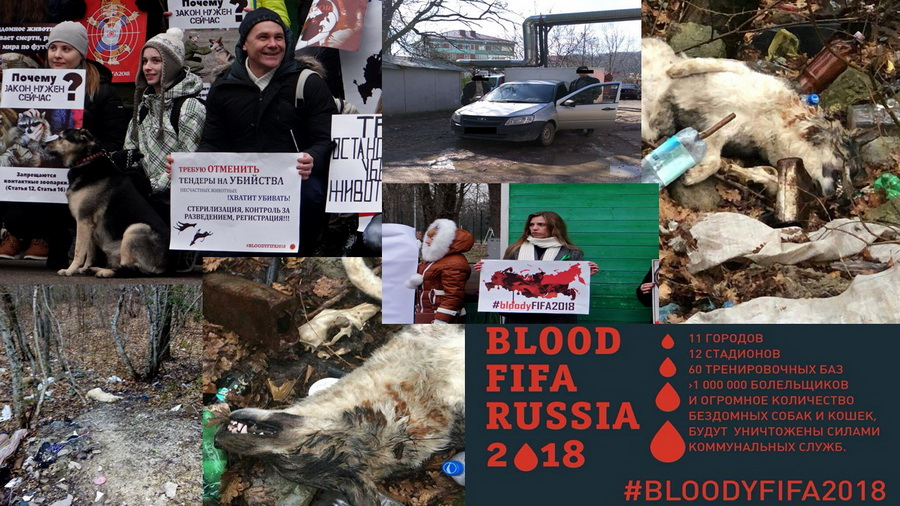#BloodyFIFA2018 Туапсе собаки зоозащитники Бася