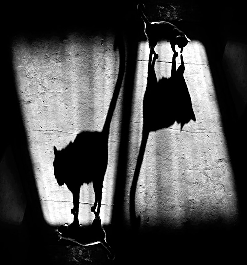 Shadow_11