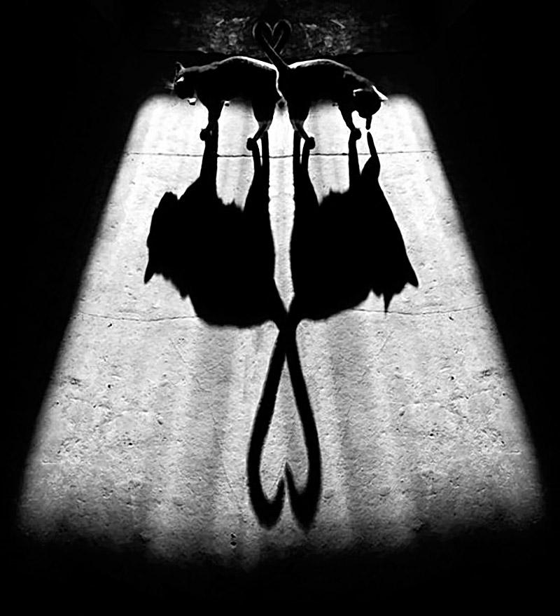 Shadow_12