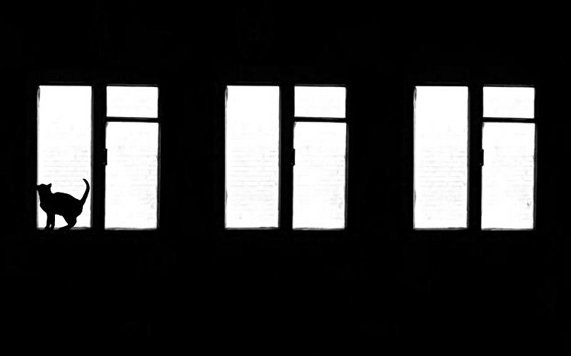 Shadow_14