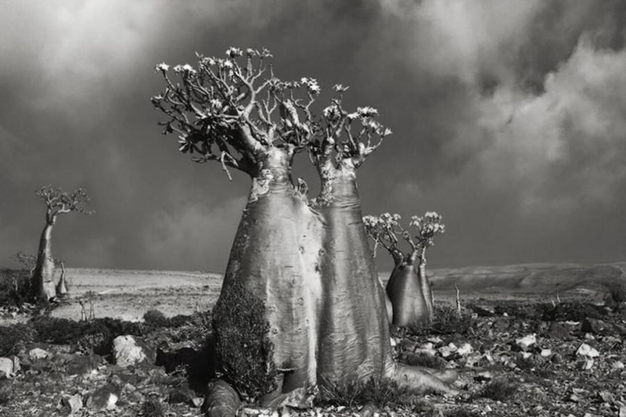 alberi-antichi-mondo-beth-moon-16-keblog
