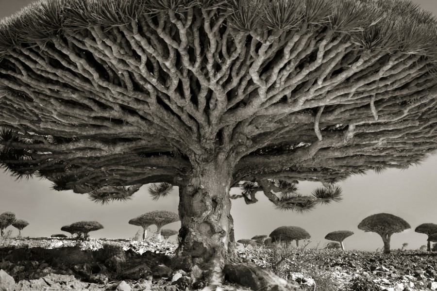 ancient-trees-beth-moon-raw