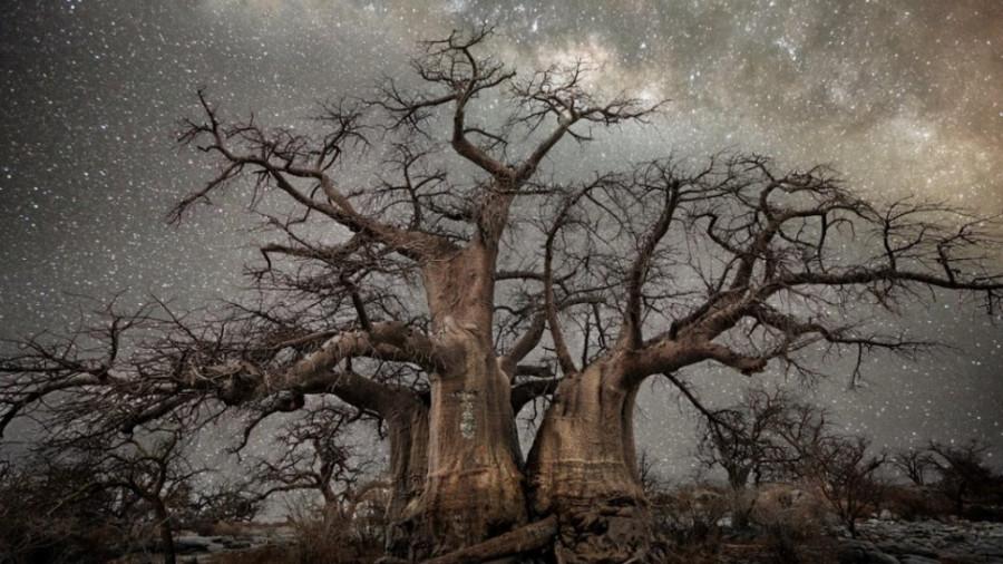 vieu-arbre-etoile-01-1080x720-968x545