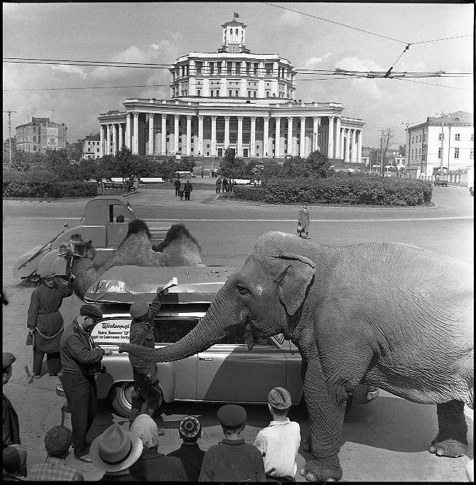 Москва, конец 1950-х