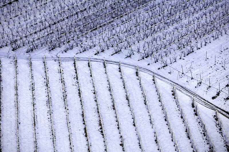 italian_vineyard ALEX MACLEAN