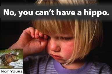 no hippo