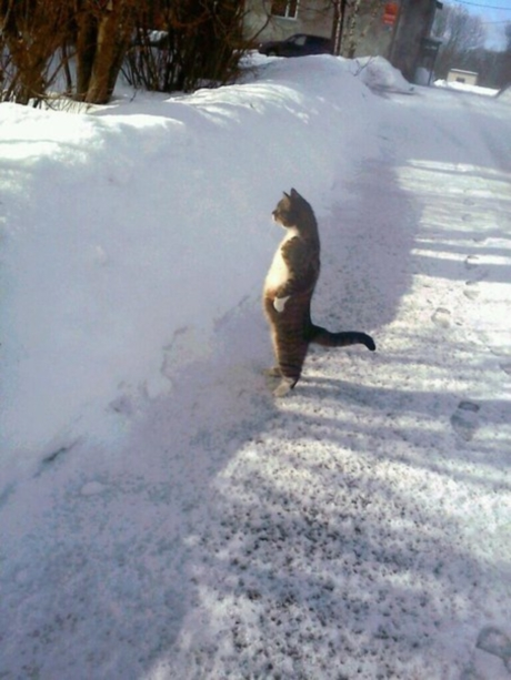 Озадаченный кот