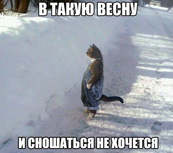 кот, котики, кот на задних лапах стоит в снегу