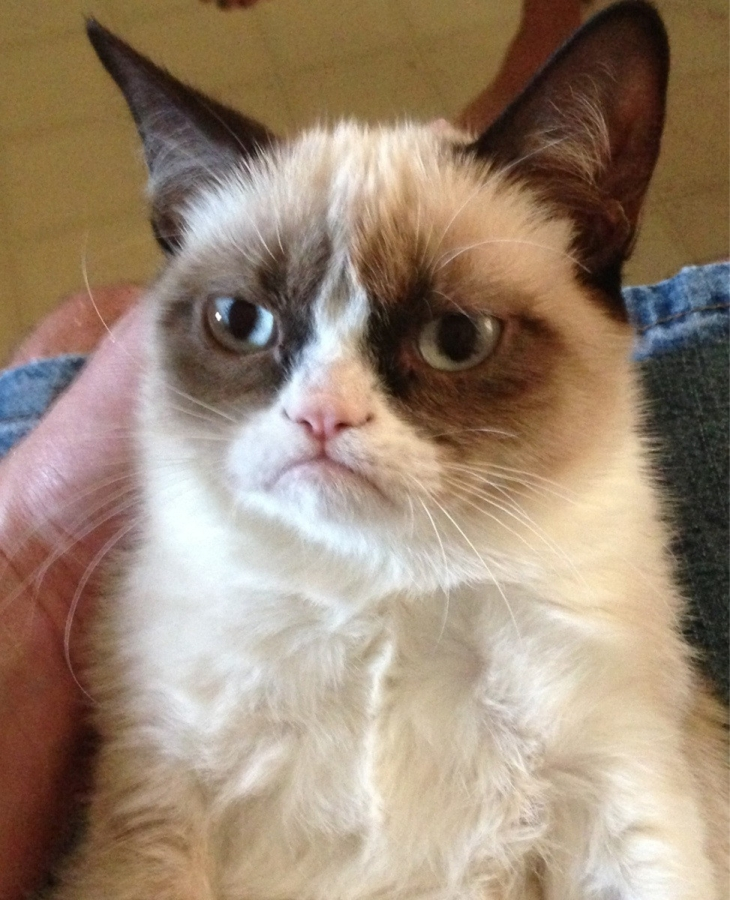 Grumpy cat, кот-мизантроп