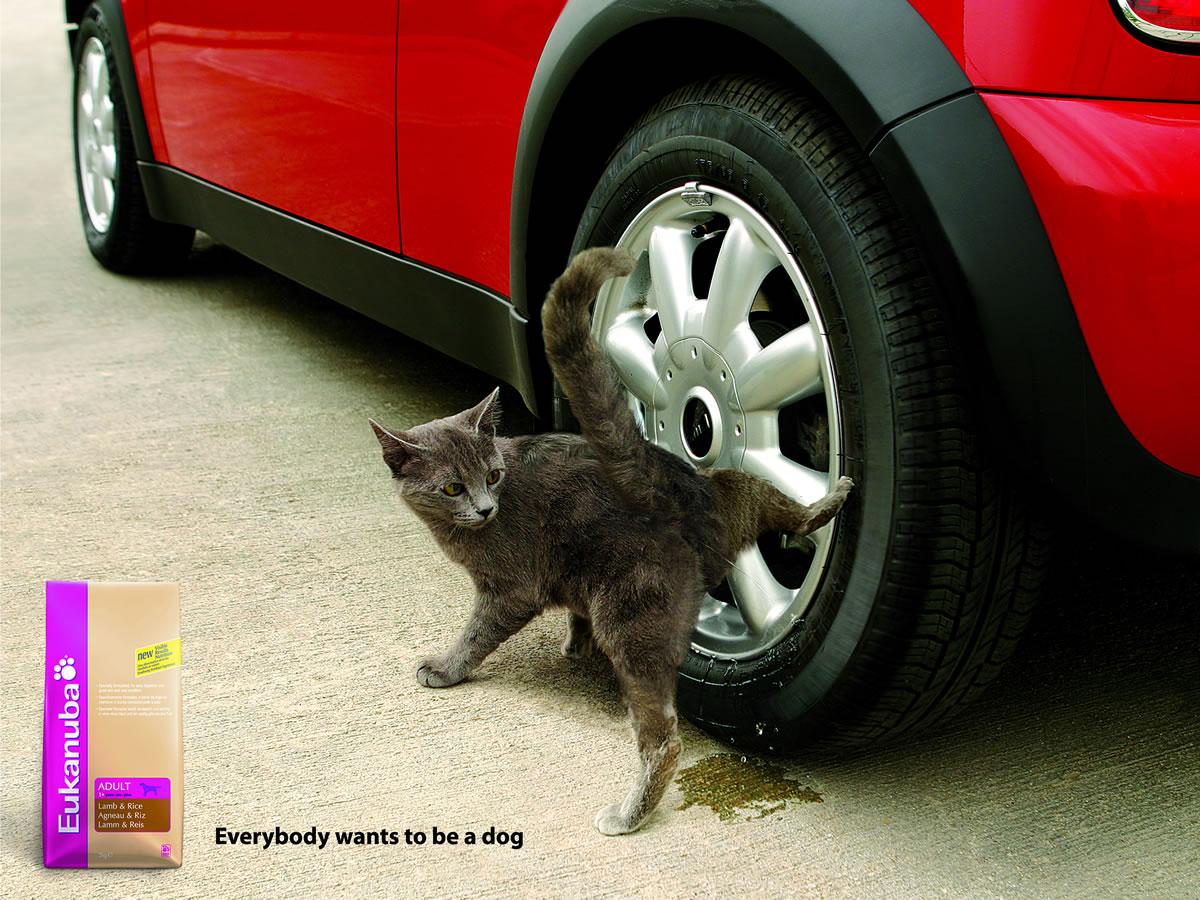 Фото писающий кот 2 фотография
