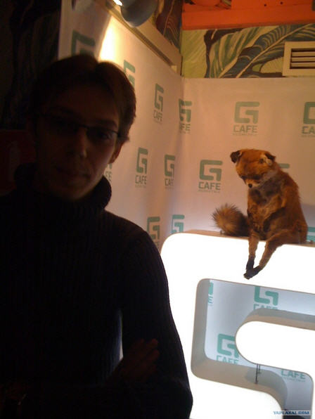 Выставка упоротого лиса
