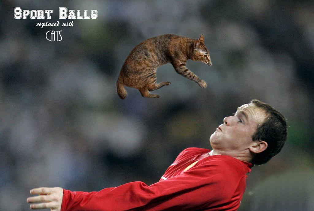 sports balls, мем, котики