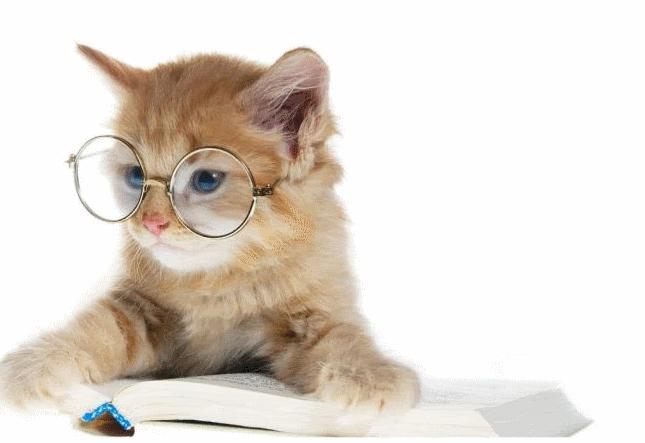 котик, очки,умный котик