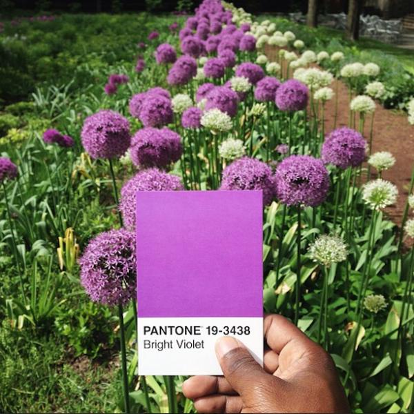 Pantone-Everyday-Life-by-Paul-Octavious-5-600x600