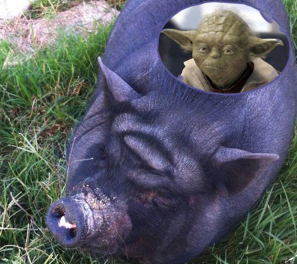 Да пребудет с тобой свинина!
