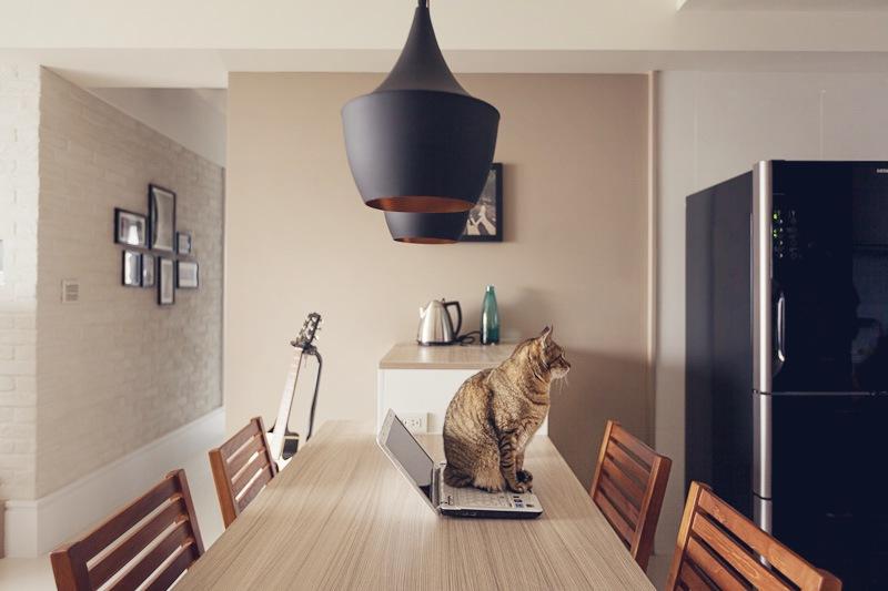 Как выглядит идеальная комната для котика
