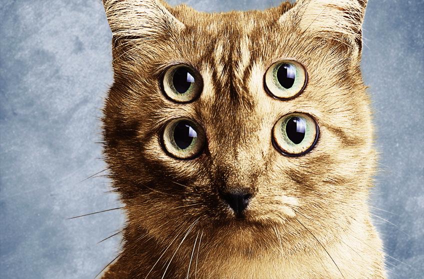 Котики в рекламе: как это прекрасно