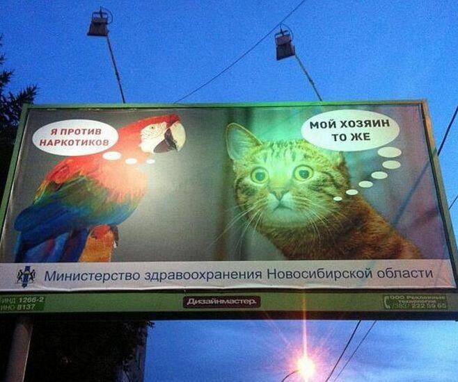Котики против наркотиков