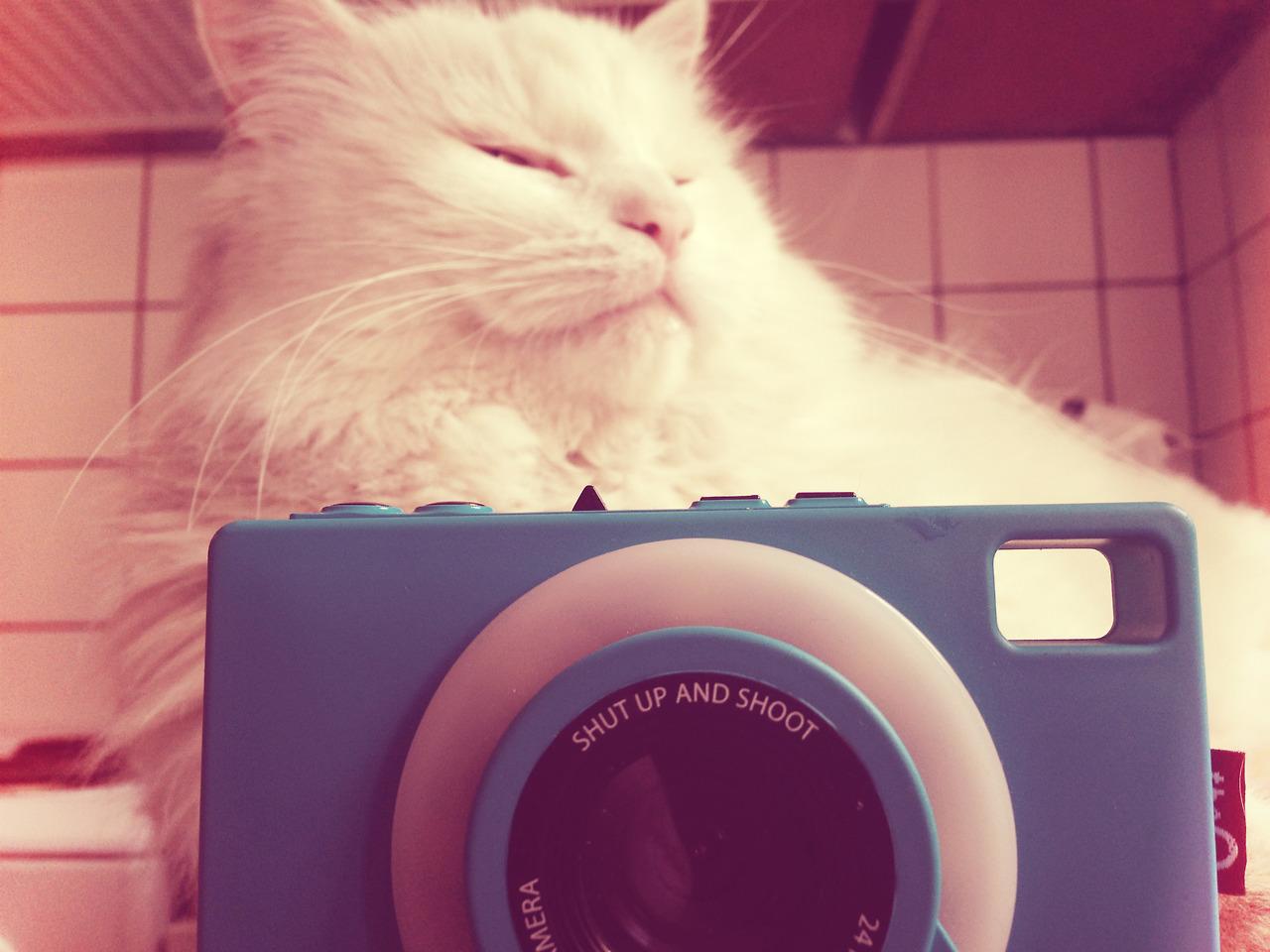 Кому нужен смартфон, если есть «социальный фотоаппарат»?