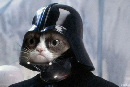 В Великобритании пройдет кинофестиваль интернет-котов