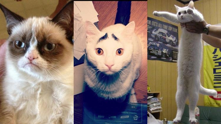 Интернет-котики